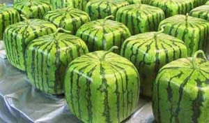squarewatermelons1