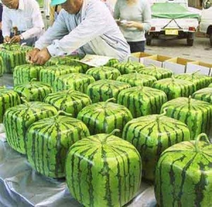 squarewatermelons4