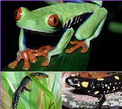 amfibianspng1-jpg
