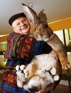 big-bunny