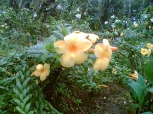 bunga-1