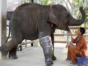 gajah-1