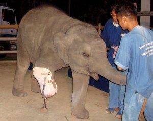 gajah-2