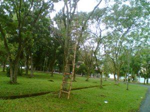 pohon-1