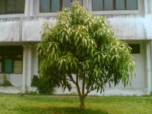 pohon-3