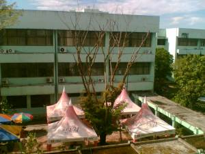 pohon-4