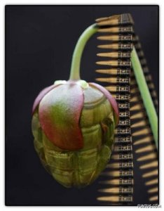 tumbuhan-aneh-5