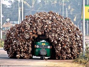 batok-kelapa