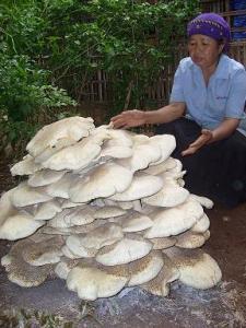 jamur-ajaib-panekan-2