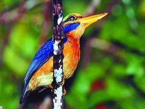 Enam Burung Sumatera Terancam Punah untuk Prangko « Ri