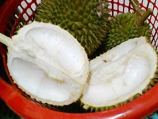 110407ckulit-durian1